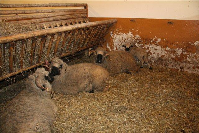 Как сделать загон для овцы
