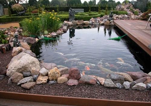 водоем для карпов